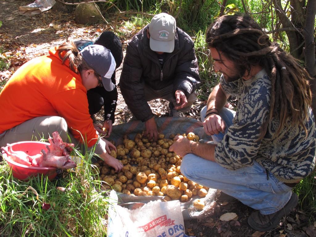 Potato loot