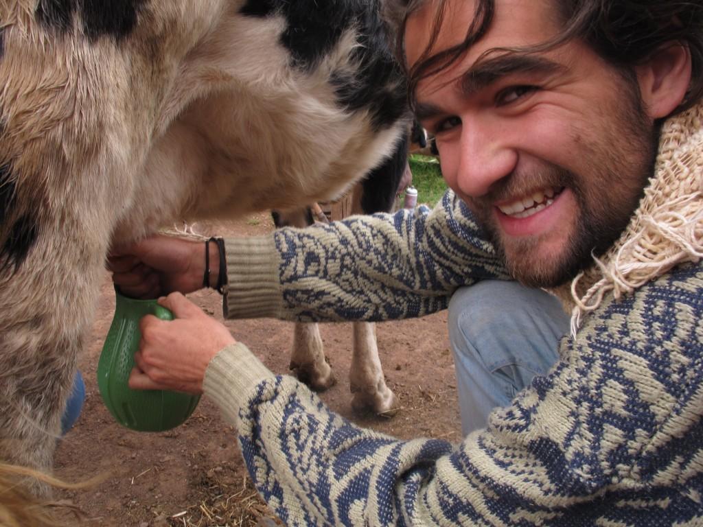 Matthew milking a cow