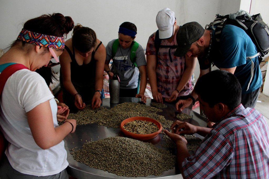Learning about coffee in Guatemala