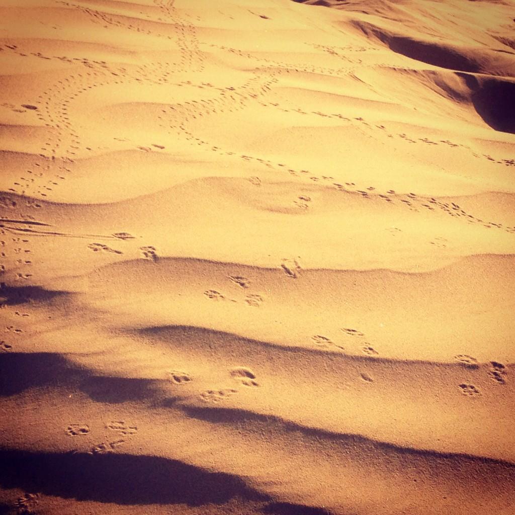 Tracks in the Negev desert