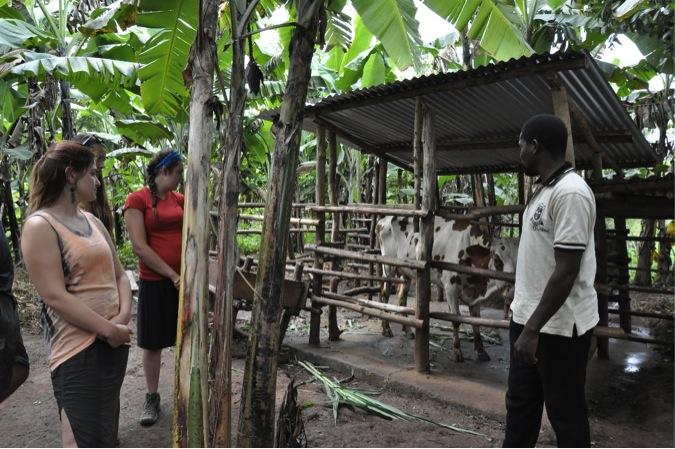 KCK Cattle Rearing Project